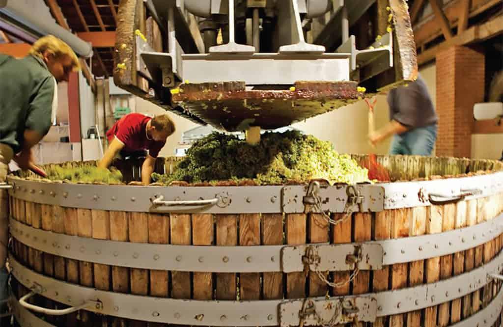 Presarea strugurilor in zona Champagne